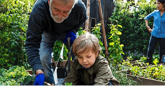 man and grandson working in garden